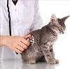 Ветеринарные клиники в Новопавловске